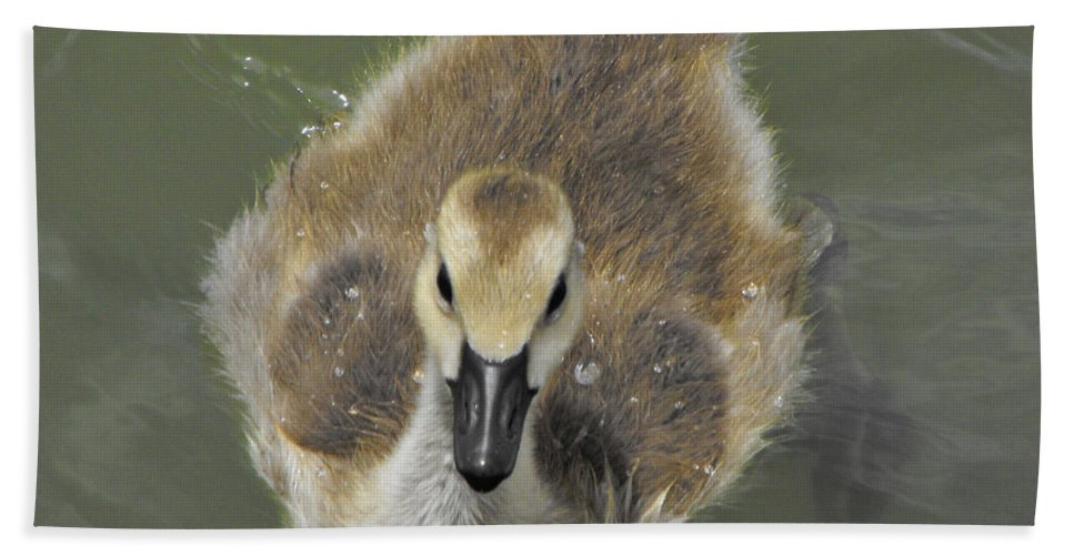 Duck Hand Towel featuring the photograph Little Guy by Brandi Maher