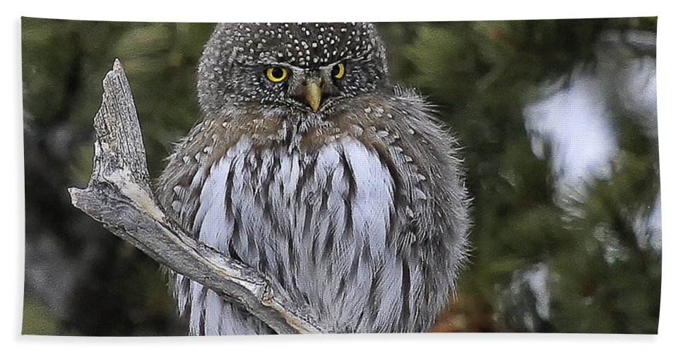 Wildlife Hand Towel featuring the photograph Little One - Northern Pygmy Owl by Elaine Haberland