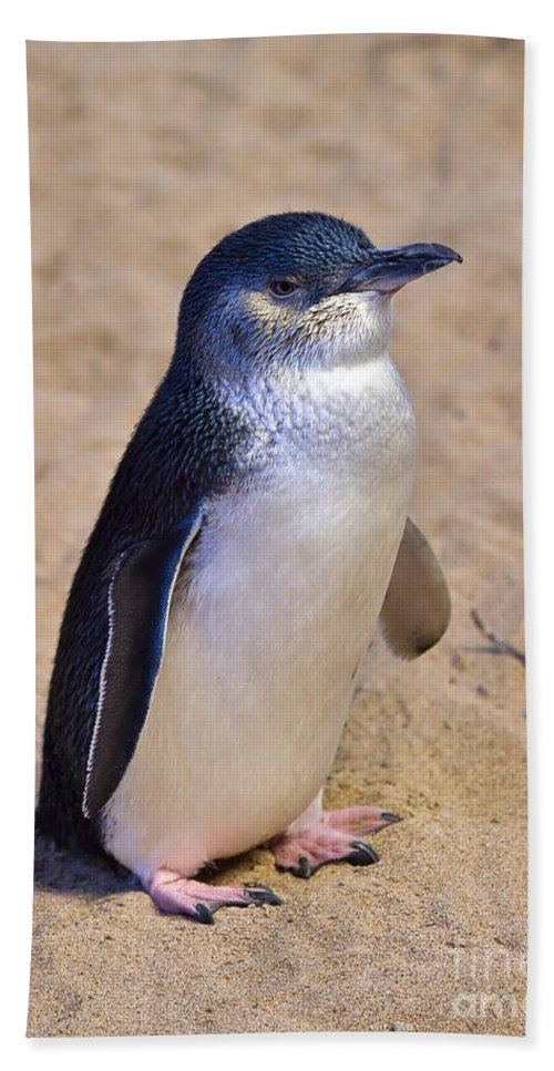 Nature Hand Towel featuring the photograph Little Penguin by Louise Heusinkveld