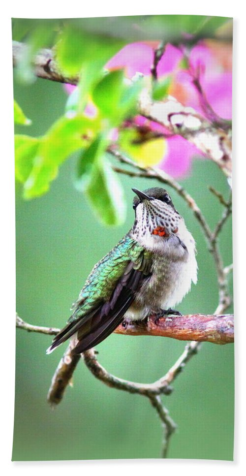 Ruby-throated Hummingbird Hand Towel featuring the photograph Little Ruby - 5x7 Card by Travis Truelove