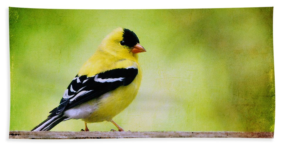 Goldfinch Hand Towel featuring the photograph Little Sir by Lois Bryan