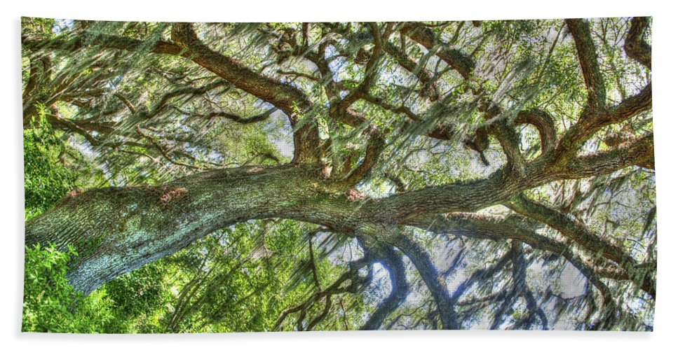 Live Oak Tree Hand Towel featuring the photograph Live Oak Tree by Dale Powell