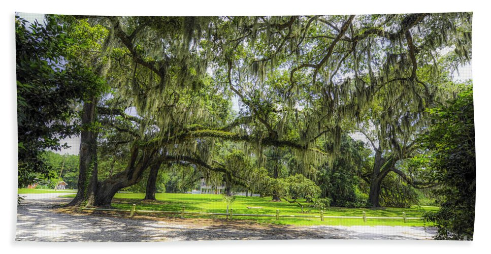 Live Oaks Hand Towel featuring the photograph Live Oaks Dripping With Spanish Moss by Dale Powell