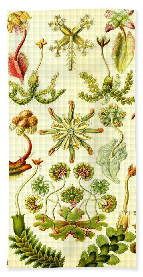 Liverworts Bath Towel featuring the digital art Liverworts Moss Brunnenlebermoos Haeckel Hepaticae by Movie Poster Prints