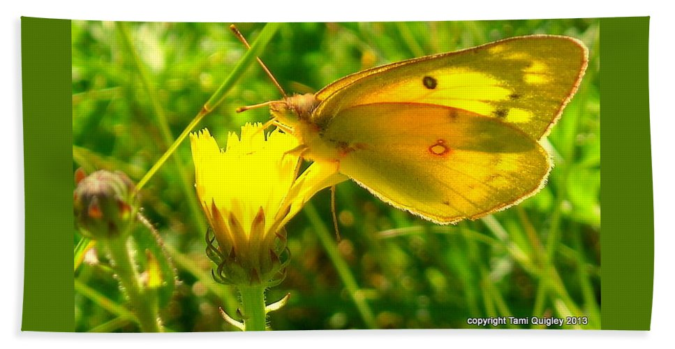 Butterfly Bath Sheet featuring the photograph Living In The Light by Tami Quigley