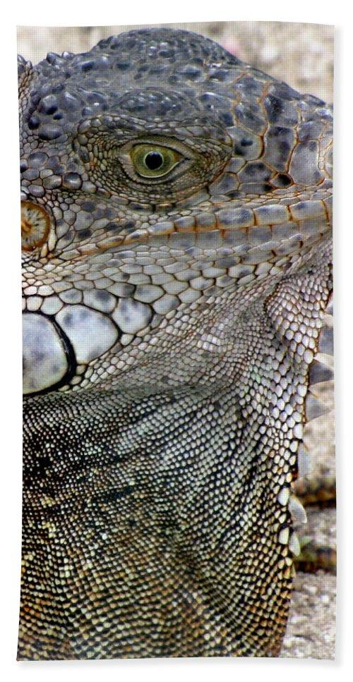 Wildlife Hand Towel featuring the photograph Lizard by Bob Slitzan