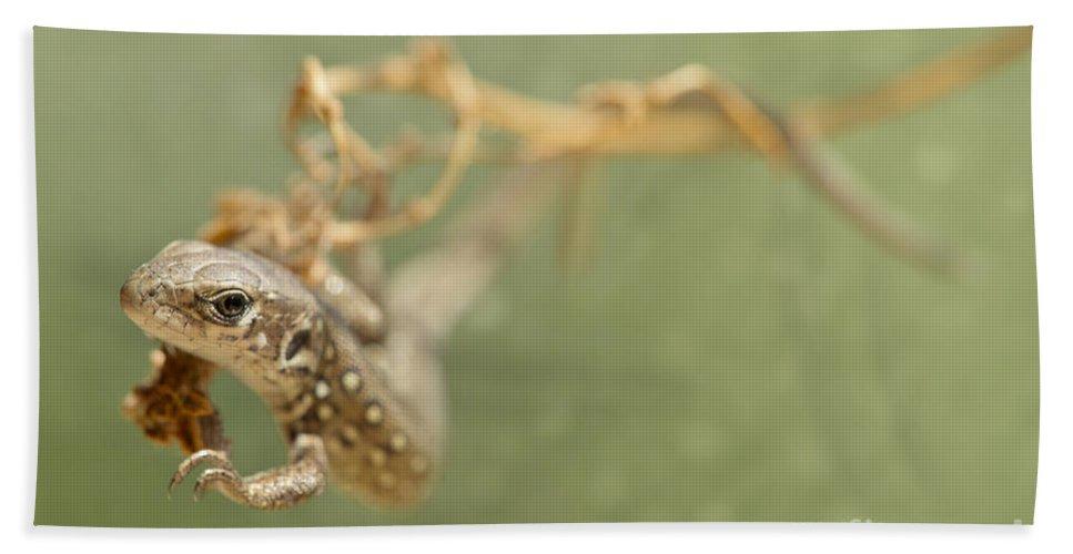Blaminsky Hand Towel featuring the photograph Lizard On The Branch by Jaroslaw Blaminsky