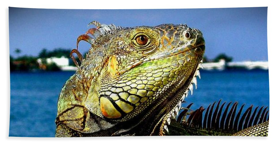 Lizard Print Bath Towel featuring the photograph Lizard Sunbathing In Miami by Monique's Fine Art