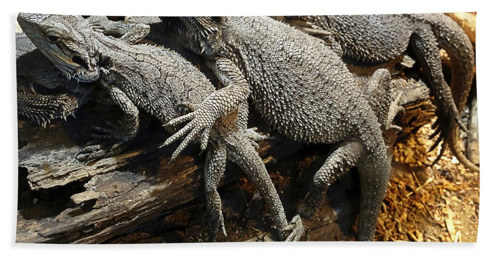 Team Bath Sheet featuring the photograph Lizards by Les Cunliffe