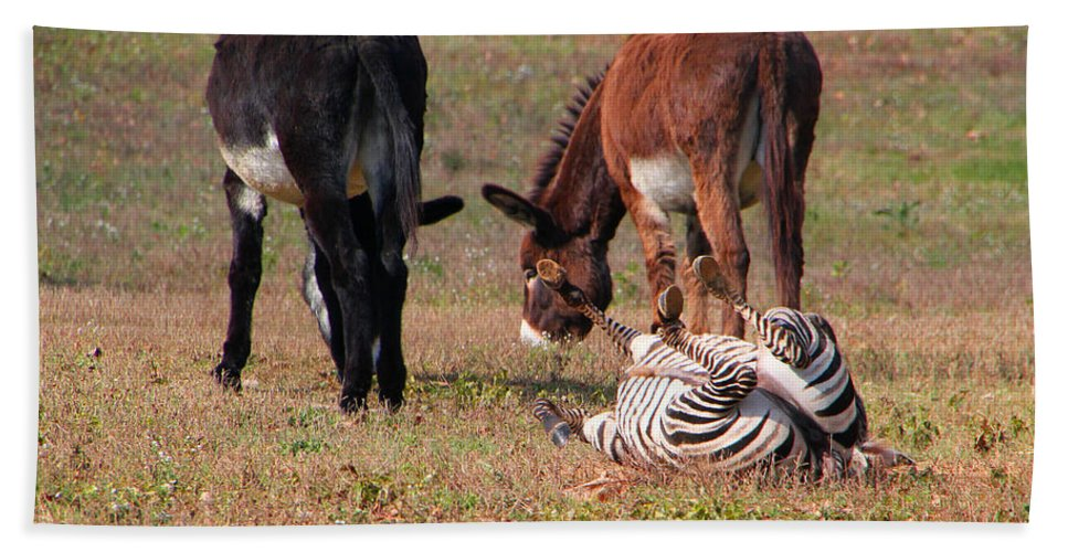 Sooc Bath Sheet featuring the photograph Lmao Mules And Zebra - Featured In Wildlife Group by Ericamaxine Price
