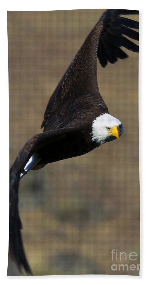 Bald Eagle Hand Towel featuring the photograph Locked In by Mike Dawson