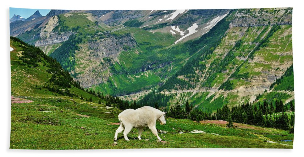 Glacier National Park Hand Towel featuring the photograph Logan Pass Mountain Goat by Greg Norrell