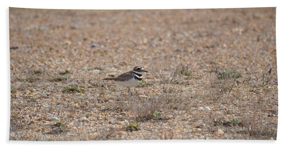 Lone Killdeer Hand Towel featuring the photograph Lone Killdeer by Maria Urso