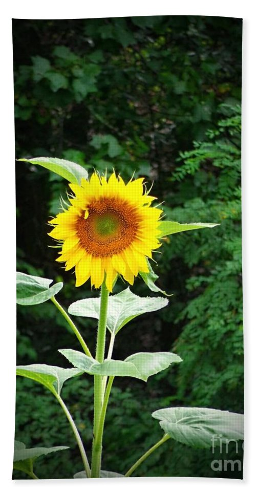 Sunflower Hand Towel featuring the photograph Lone Sunflower by Jannice Walker