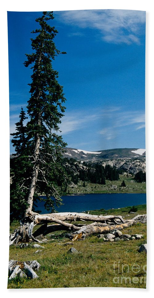 Mountains Bath Sheet featuring the photograph Lone Tree At Pass by Kathy McClure