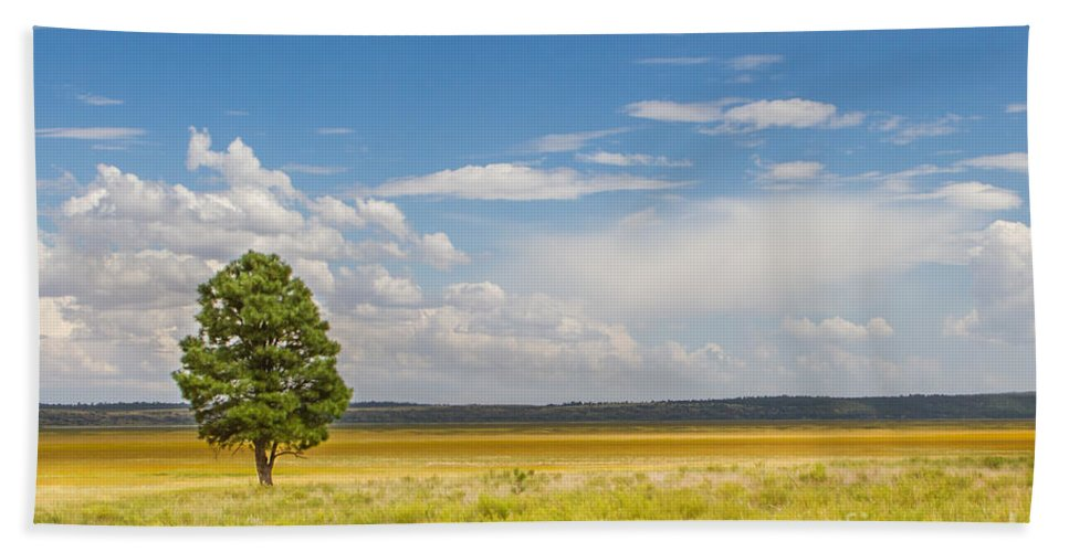 2011 Hand Towel featuring the photograph Lone Tree by Nicholas Pappagallo Jr