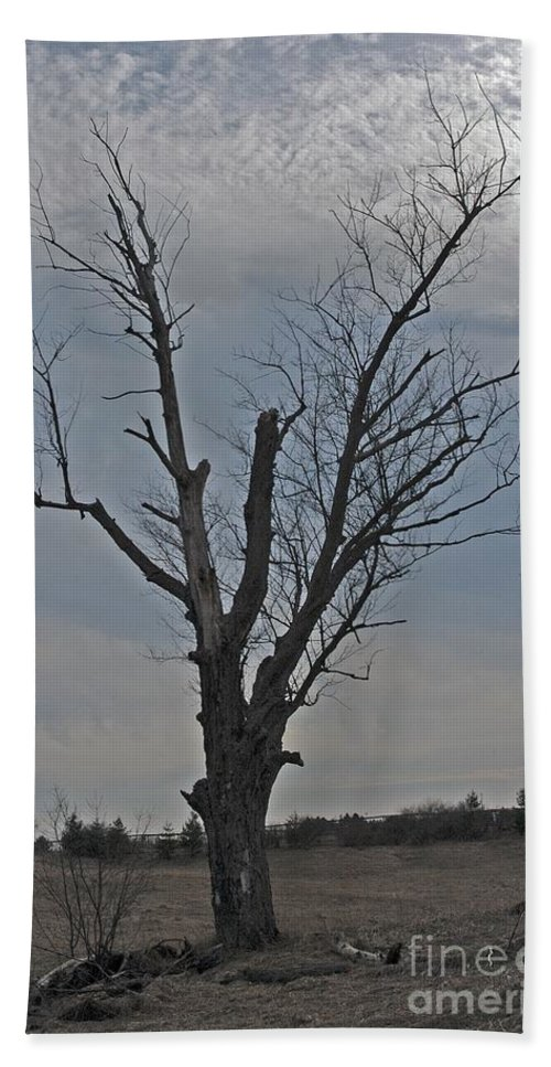 Dead Tree Hand Towel featuring the photograph Lonesome by Joseph Yarbrough
