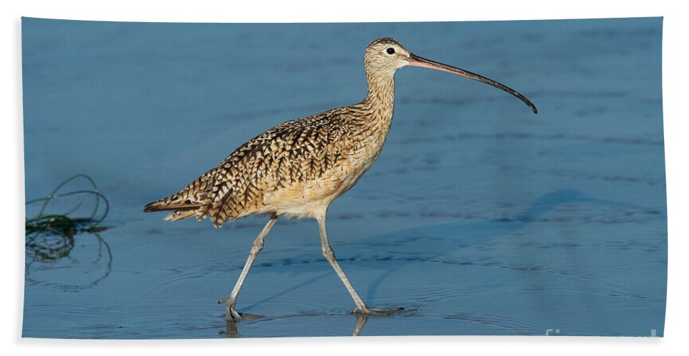 North American Hand Towel featuring the photograph Long-billed Curlew by Anthony Mercieca
