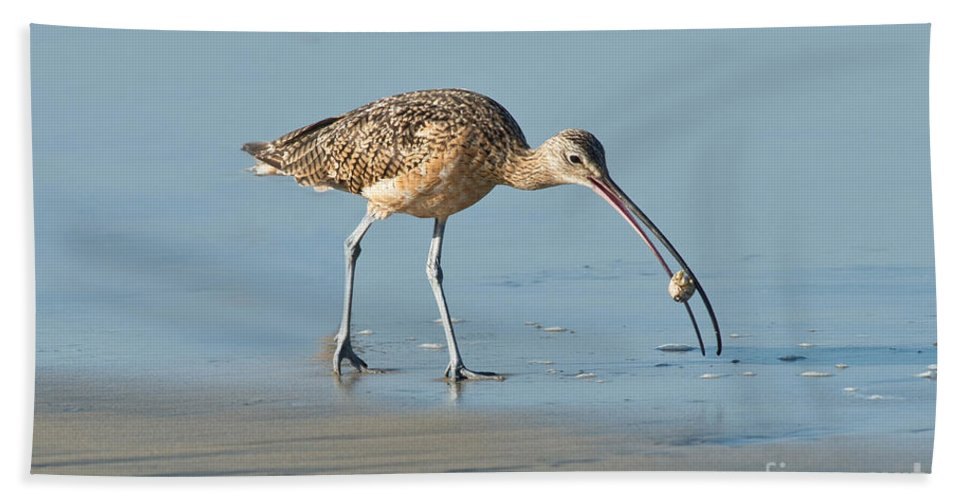 North American Hand Towel featuring the photograph Long-billed Curlew Catching Crab by Anthony Mercieca