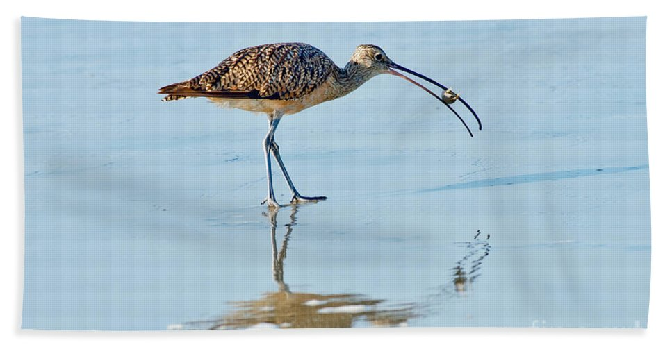 North American Hand Towel featuring the photograph Long-billed Curlew With Crab by Anthony Mercieca