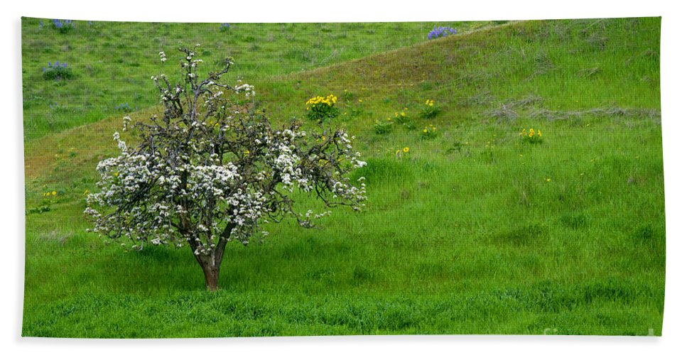 Meadow Hand Towel featuring the photograph Long Forgotten by Mike Dawson
