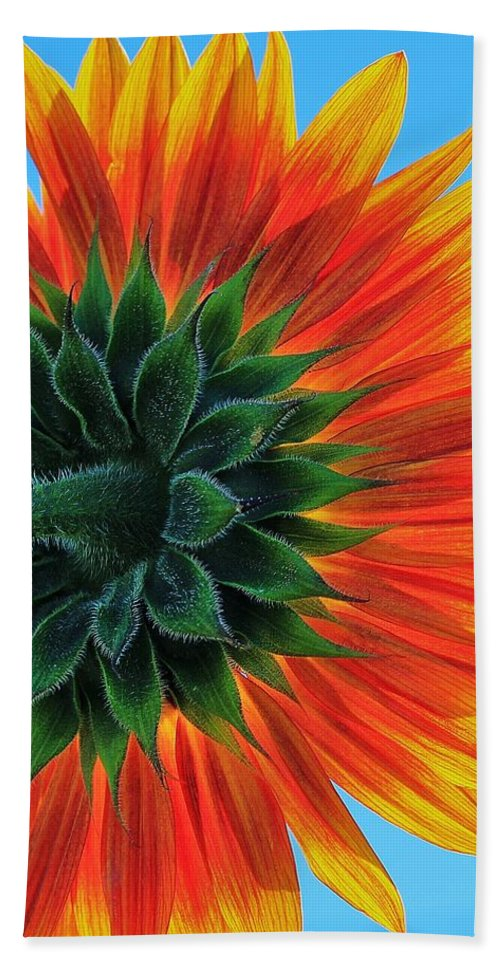 Sunflower Hand Towel featuring the photograph Longing For Summer by Benjamin Yeager