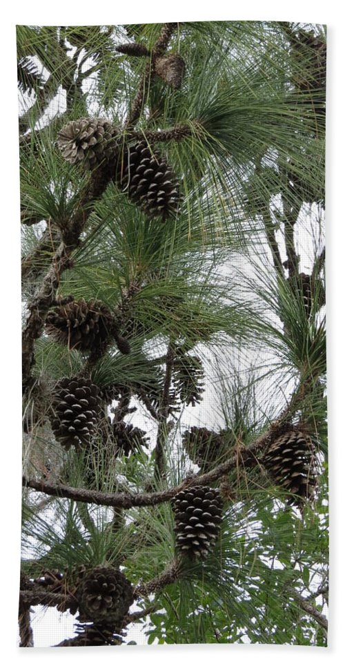 Longleaf Pine Cones Hand Towel featuring the photograph Longleaf Pine Cones by Zina Stromberg
