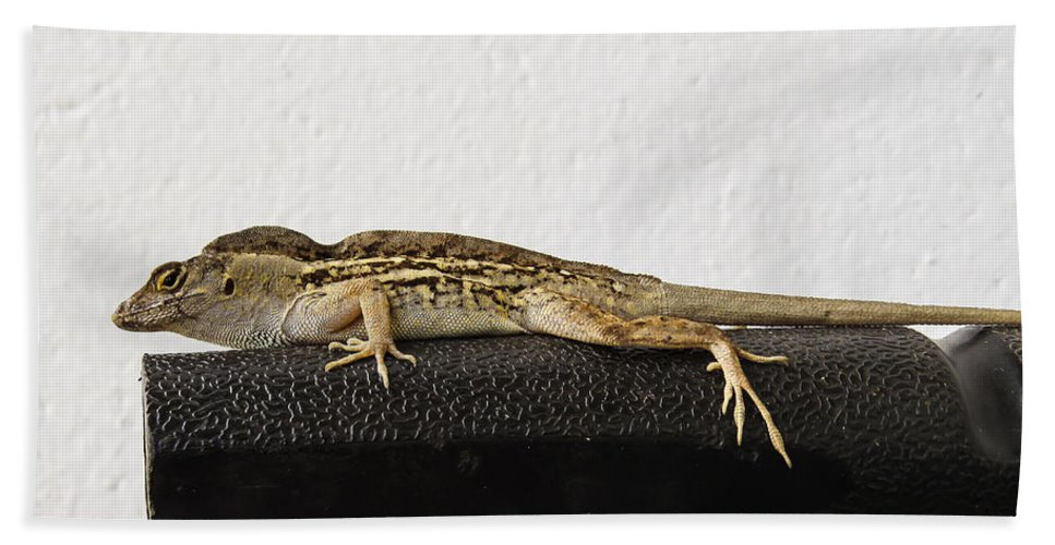 Lizard Hand Towel featuring the photograph Look At Me by Zina Stromberg