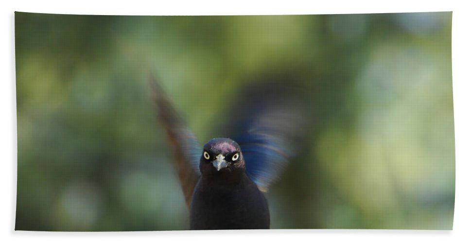 Bird Bath Sheet featuring the photograph Look Deep Into My Eyes by Donna Blackhall