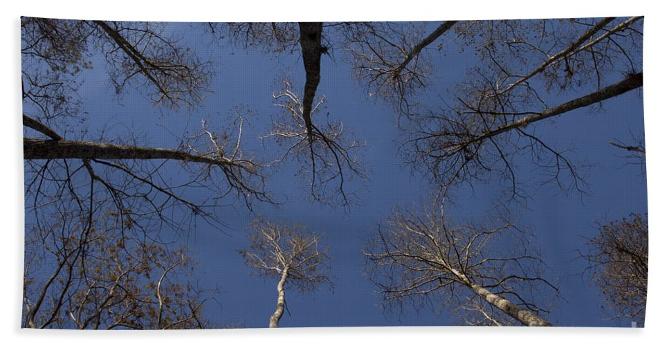 Trees Bath Sheet featuring the photograph Look Up by Meg Rousher