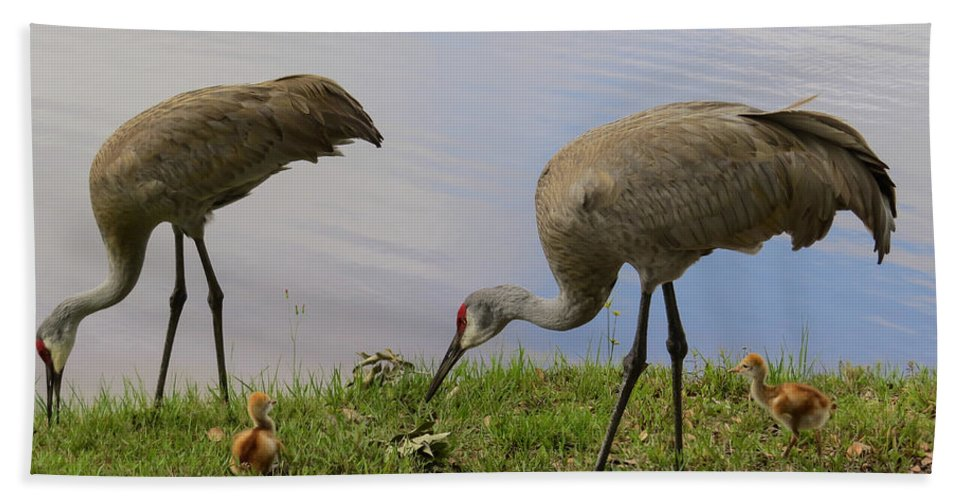 Sandhill Cranes Hand Towel featuring the photograph Looking Around by Zina Stromberg