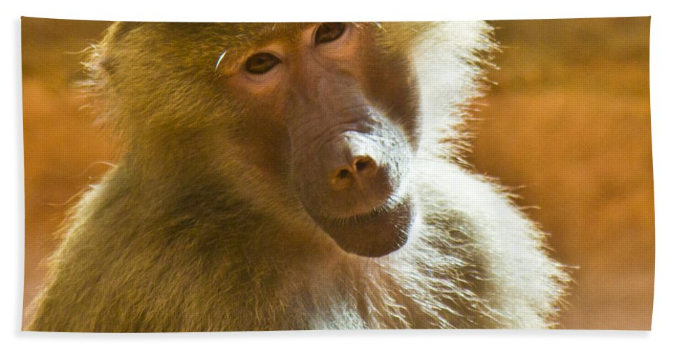 Baboon Bath Sheet featuring the photograph Looking At You. by Jonny D