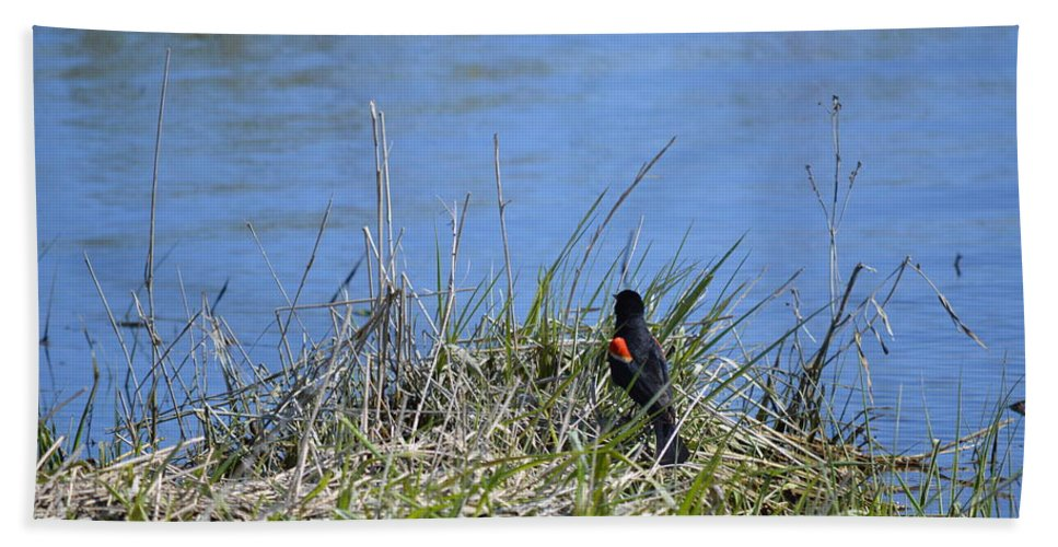 Red-wing Hand Towel featuring the photograph Looking For A Drink by Bonfire Photography