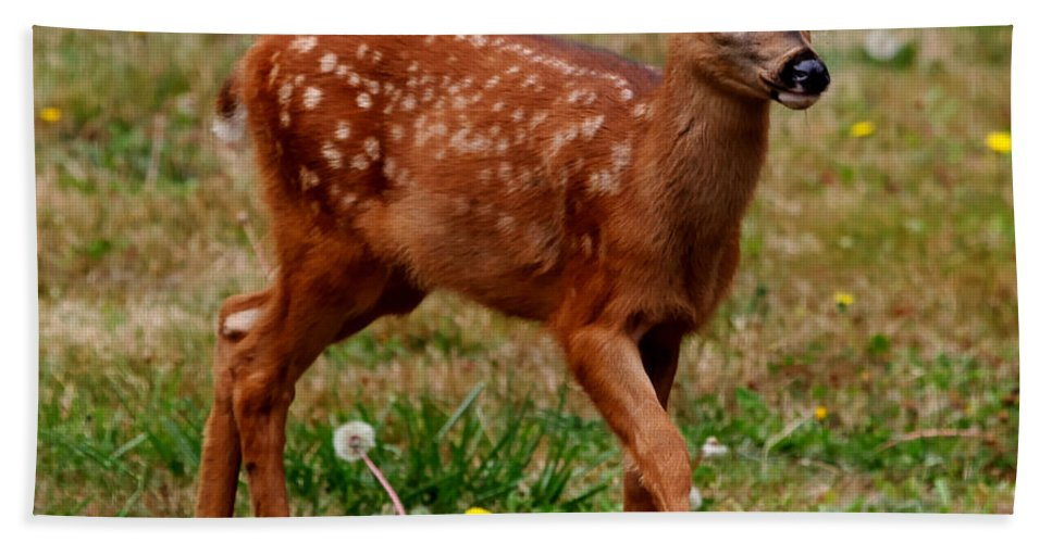 Deer Bath Sheet featuring the photograph Looking For Mom - Pacific Northwest Washington by Tap On Photo
