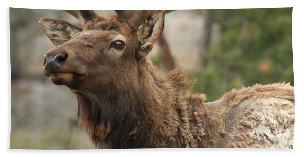 Rocky Mountain National Park Bath Sheet featuring the photograph Looking Proud by Adam Jewell