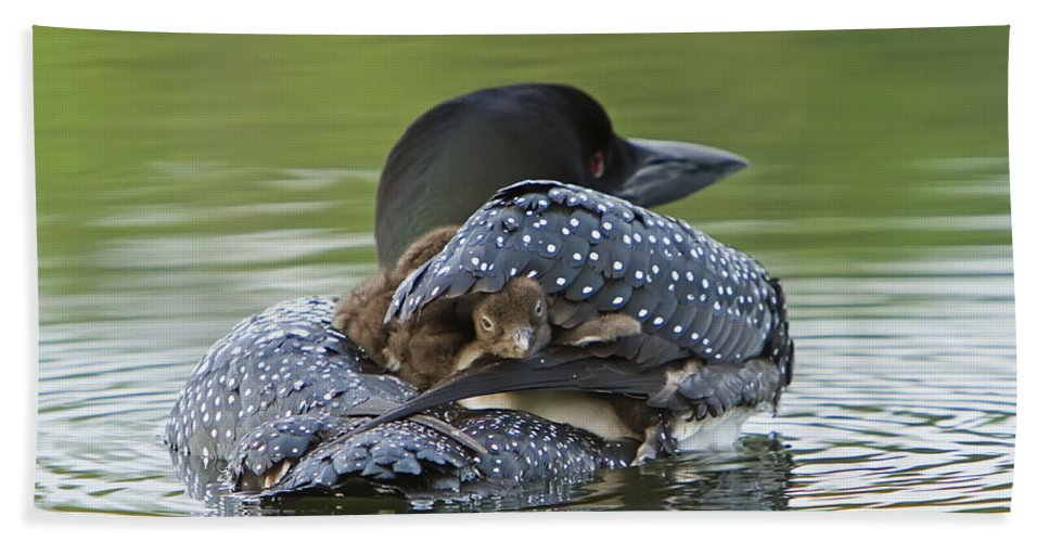 Common Loon Hand Towel featuring the photograph Loon Chick - Peek A Boo by John Vose