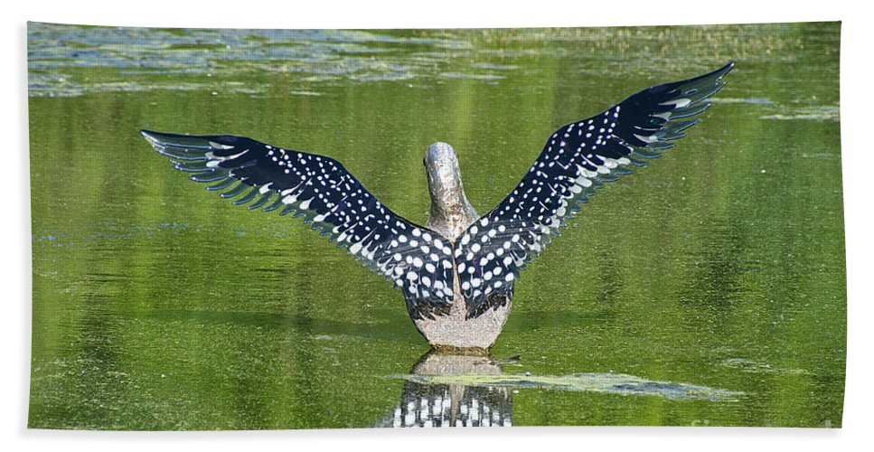 Outdoors Bath Sheet featuring the photograph Loon Wings by Susan Herber