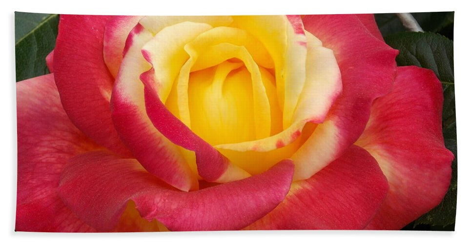Roses Bath Sheet featuring the photograph Losing The Yellow by Catherine Gagne