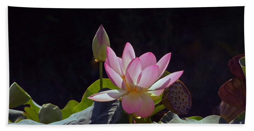Lotus Blossom With Bud And Seed Pods Hand Towel featuring the photograph Lotus Enchantment by Byron Varvarigos