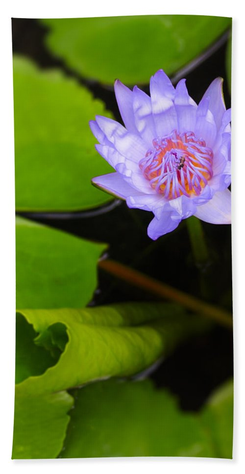3scape Photos Bath Sheet featuring the photograph Lotus Flower And Lily Pad by Adam Romanowicz