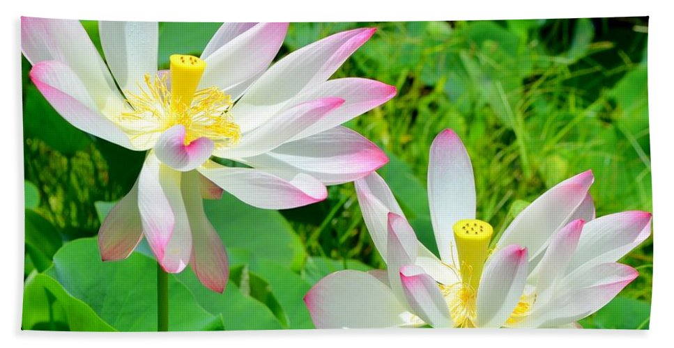 Lotus flowers dancing in the wind hand towel for sale by mary deal lotus blossom hand towel featuring the photograph lotus flowers dancing in the wind by mary deal mightylinksfo