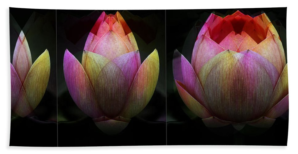 Abstract Hand Towel featuring the photograph Lotus In Transition by Wayne Sherriff