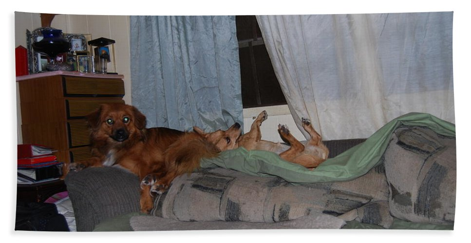 Time Out Time. Dogs Hand Towel featuring the photograph Loungeing by Robert Floyd