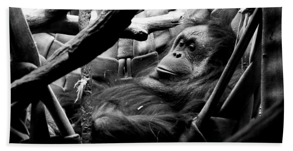 Orangutan Hand Towel featuring the photograph Lounging by Anna Burdette