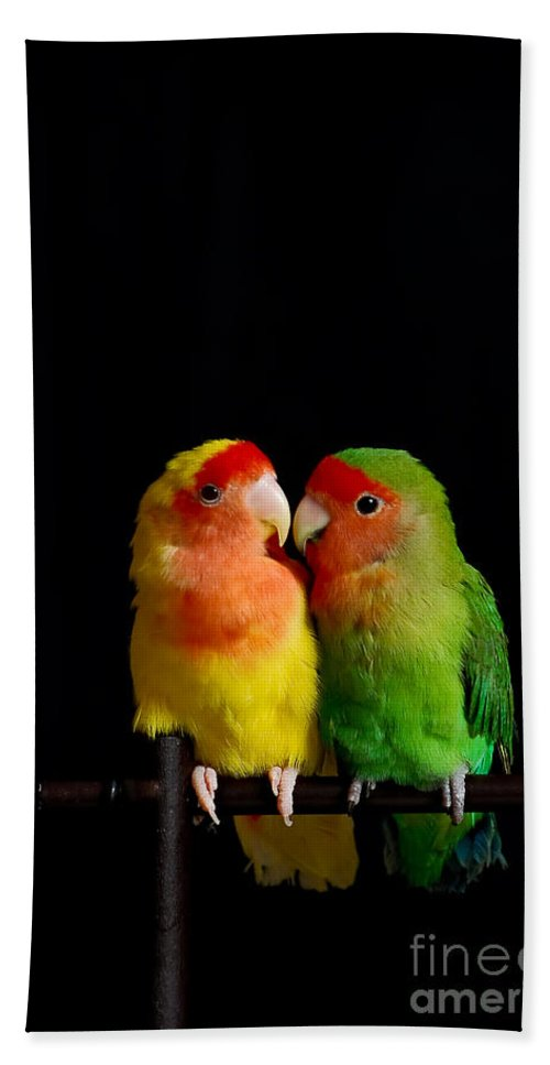Love Hand Towel featuring the photograph Love Birds At First Sight by Syed Aqueel