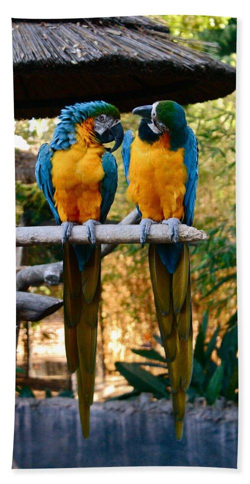 Santa Ana Zoo Hand Towel featuring the photograph Love Birds by Carol Tsiatsios
