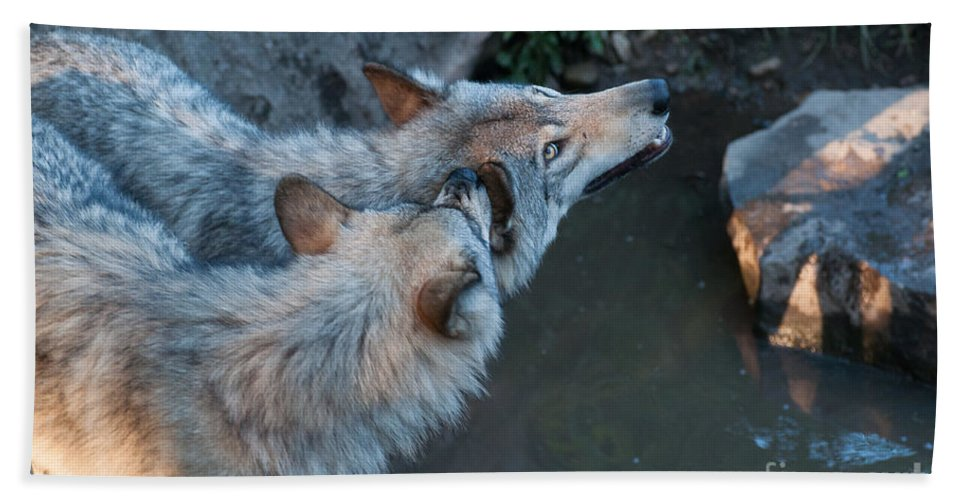Timberwolf Bath Sheet featuring the photograph Love Bites by Bianca Nadeau