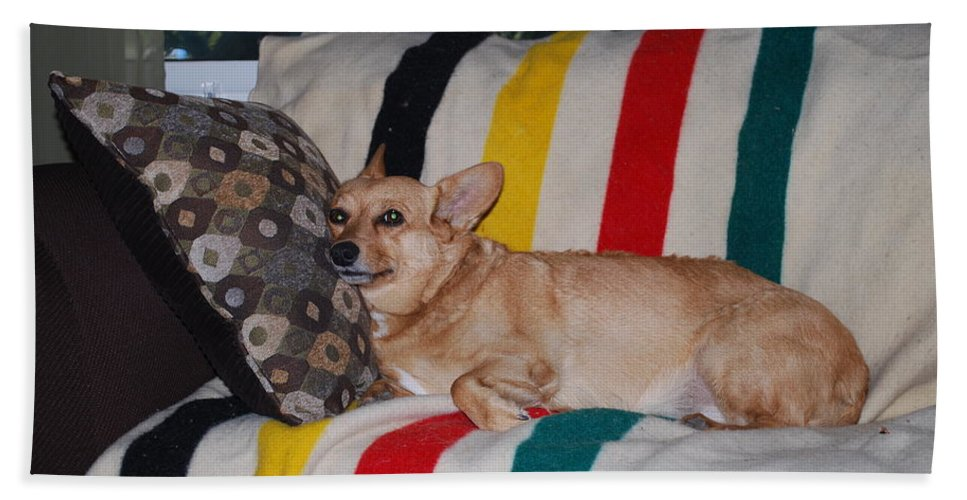 That's Comfort Dog Hand Towel featuring the photograph Love My Pillow Dad by Robert Floyd