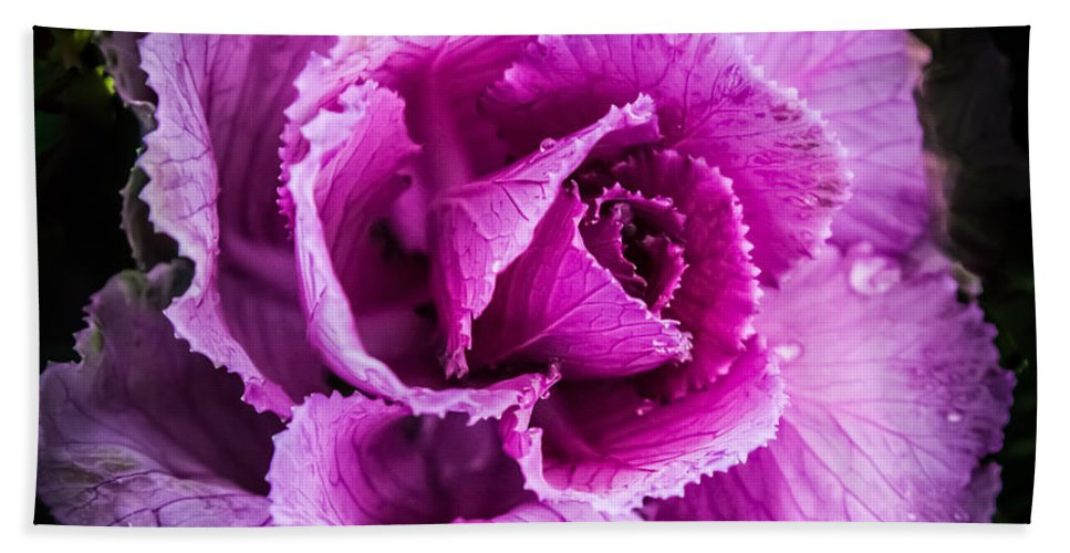 Cabbage Hand Towel featuring the photograph Love Of Lavender by Karen Wiles