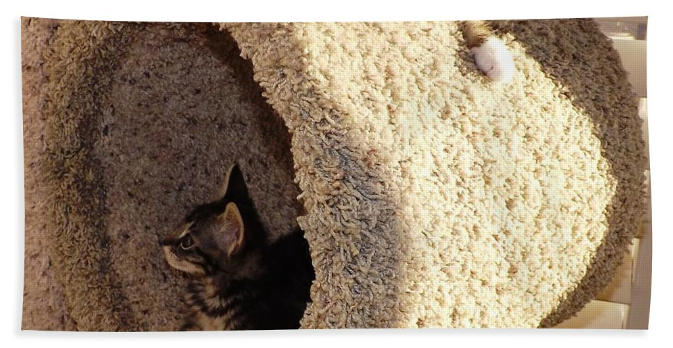 Kittens Hand Towel featuring the photograph Love Our Cat Condo by Jussta Jussta